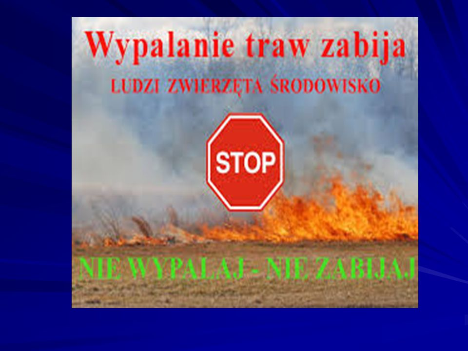 Pożary niszczą przyrodę Pożar traw oznacza zniszczenie miejsc lęgowych wielu gatunków gnieżdżących się na ziemi i w krzewach.