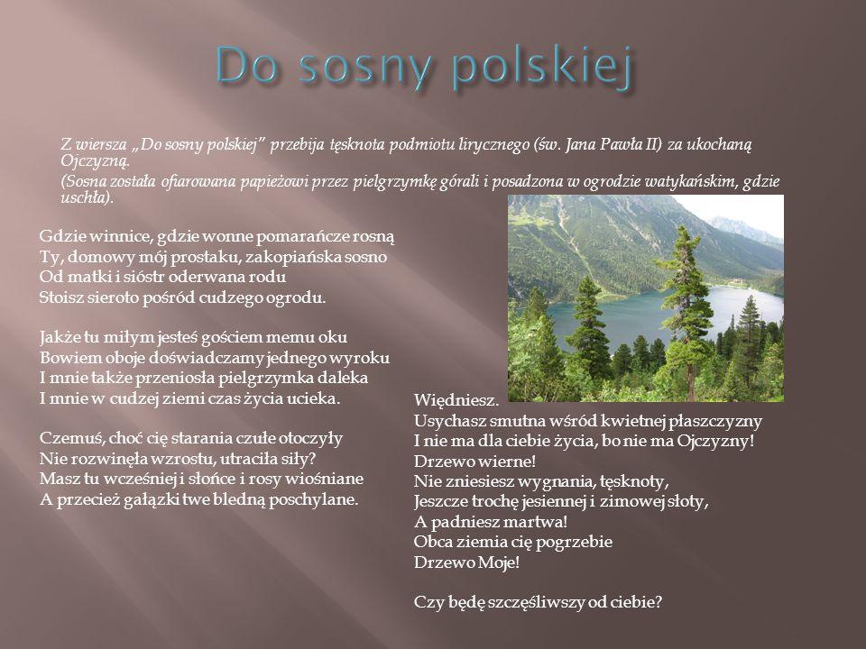 """Z wiersza """"Do sosny polskiej"""" przebija tęsknota podmiotu lirycznego (św. Jana Pawła II) za ukochaną Ojczyzną. (Sosna została ofiarowana papieżowi prze"""