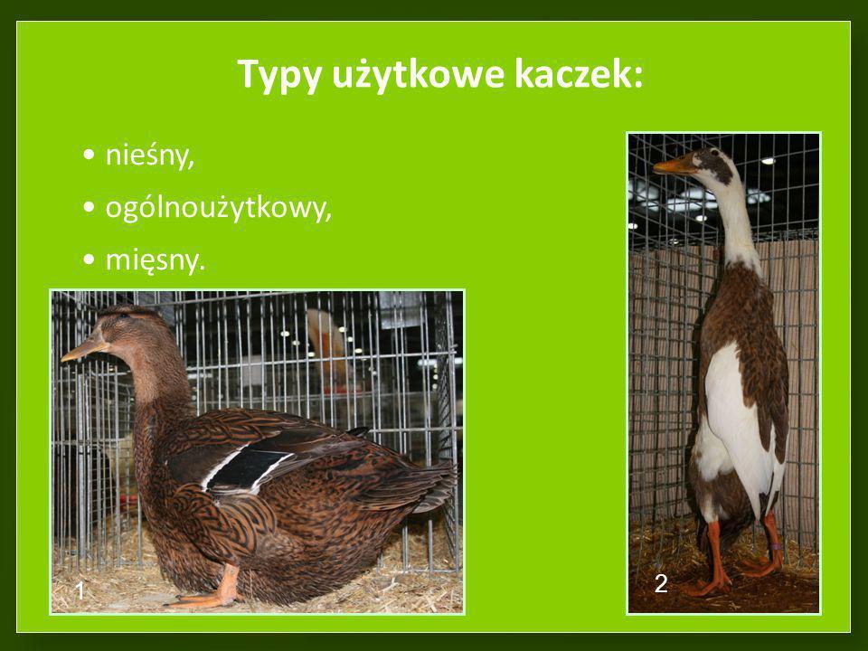 Typy użytkowe kaczek: nieśny, ogólnoużytkowy, mięsny. 1 2