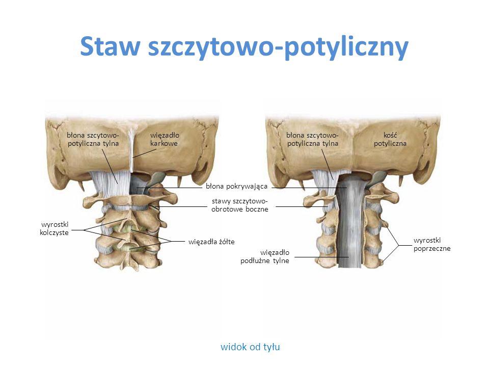 Staw szczytowo-obrotowy widok od górywidok od tyłu otwór kręgowy więzadło skrzydłowe guzek przedni ząb kręgu obrotowego dołek stawowy górny łuk przedni kręgu szczytowego wyrostek kolczysty kręgu obrotowego łuk tylny kręgu szczytowego wyrostek poprzeczny więzadło wierzchołka zęba więzadło poprzeczne kręgu szczytowego guzek tylny wyrostek poprzeczny wyrostek kolczysty kręgu obrotowego stawy szczytowo- obrotowe boczne ząb kręgu obrotowego dołek stawowy górny staw szczytowo- obrotowy pośrodkowy wyrostki poprzeczne