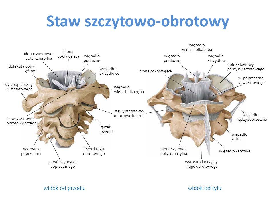 Połączenia klatki piersiowej Połączenia żeber z kręgosłupem – stawy głów żeber – stawy żebrowo-poprzeczne Połączenia żeber z mostkiem – chrząstkozrost mostkowo-zebrowy (c 1) – stawy mostkowo żebrowe (c 2-7) – stawy międzychrząstkowe (c 8-10) – chrząstkozrosty mostka