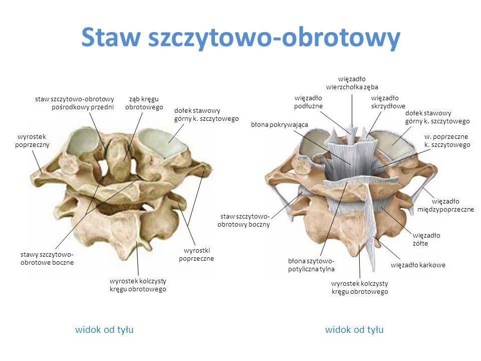 Staw szczytowo-obrotowy widok od tyłu błona szytowo- potyliczna tylna błona pokrywająca staw szczytowo- obrotowy boczny więzadło skrzydłowe dołek staw