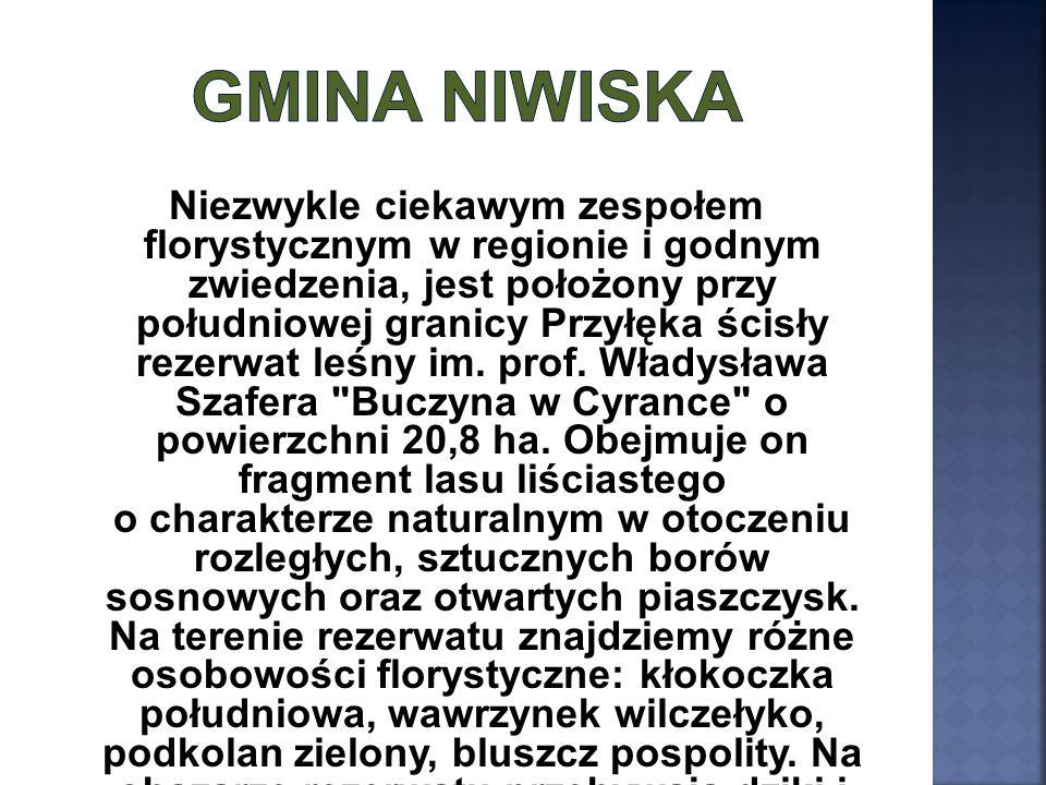Niezwykle ciekawym zespołem florystycznym w regionie i godnym zwiedzenia, jest położony przy południowej granicy Przyłęka ścisły rezerwat leśny im. pr