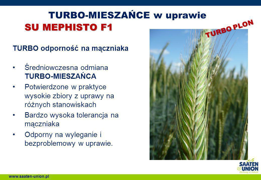 TURBO-MIESZAŃCE w uprawie SU MEPHISTO F1 TURBO odporność na mączniaka Średniowczesna odmiana TURBO-MIESZAŃCA Potwierdzone w praktyce wysokie zbiory z