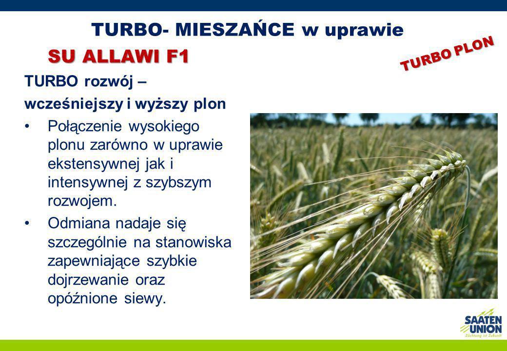 TURBO- MIESZAŃCE w uprawie SU ALLAWI F1 TURBO rozwój – wcześniejszy i wyższy plon Połączenie wysokiego plonu zarówno w uprawie ekstensywnej jak i inte