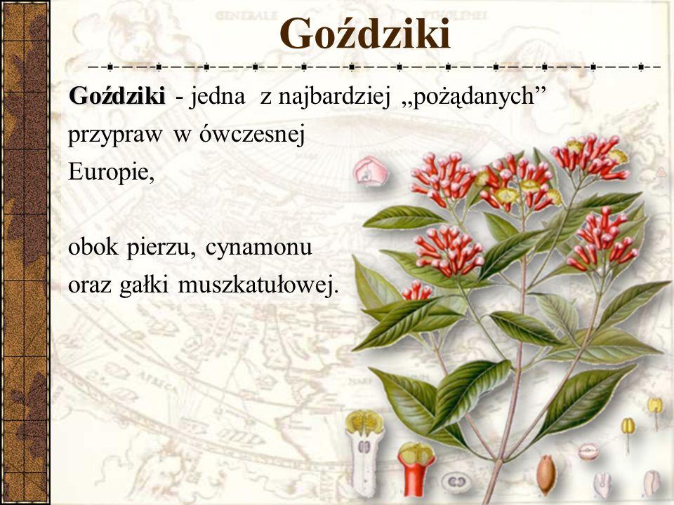 """Goździki Goździki Goździki - jedna z najbardziej """"pożądanych przypraw w ówczesnej Europie, obok pierzu, cynamonu oraz gałki muszkatułowej."""