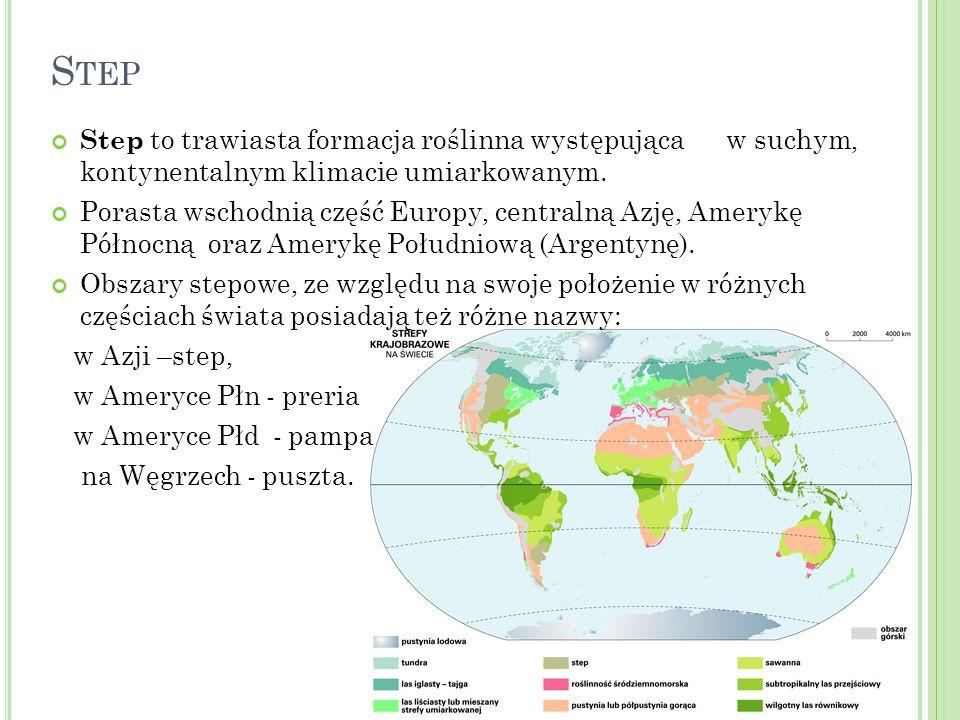S TEP Step to trawiasta formacja roślinna występująca w suchym, kontynentalnym klimacie umiarkowanym. Porasta wschodnią część Europy, centralną Azję,