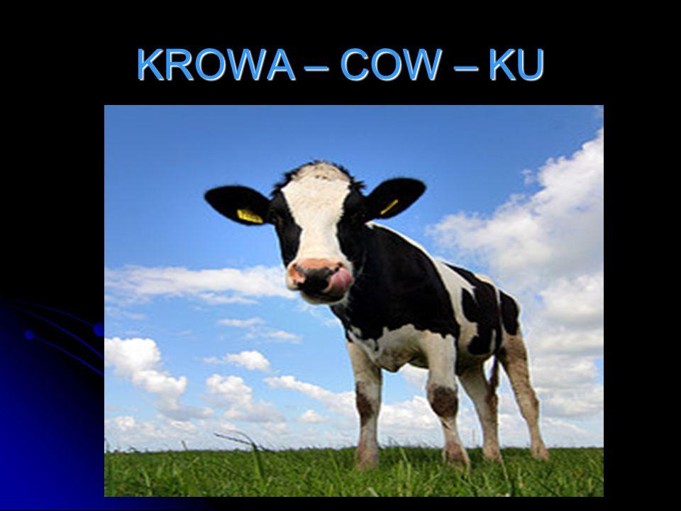KROWA – COW – KU