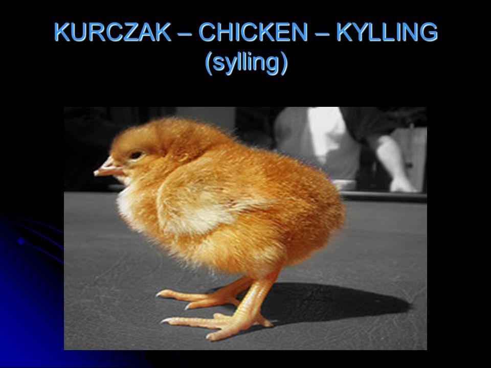 KURCZAK – CHICKEN – KYLLING (sylling)