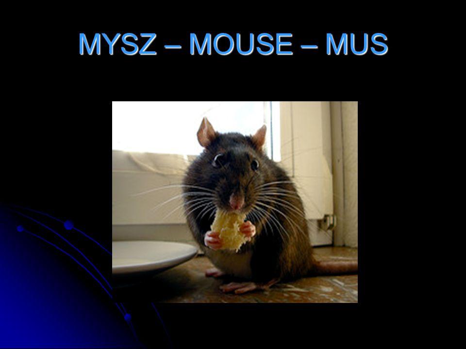 MYSZ – MOUSE – MUS