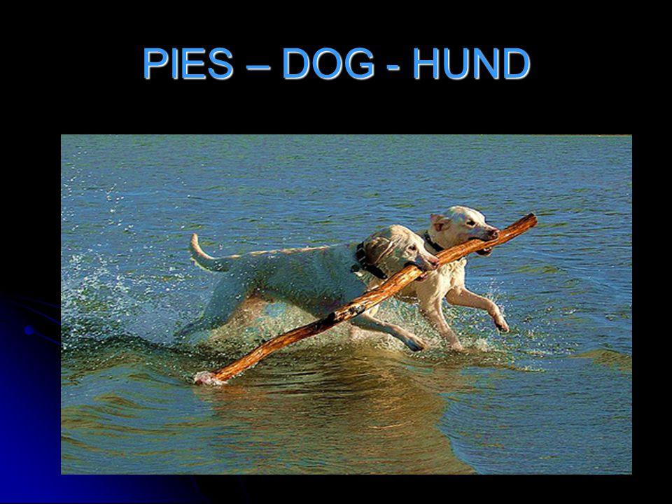 PIES – DOG - HUND