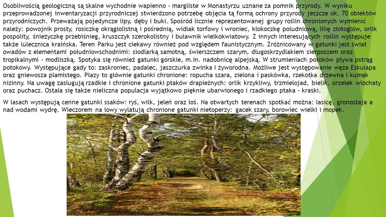 Osobliwością geologiczną są skalne wychodnie wapienno - margliste w Monastyrzu uznane za pomnik przyrody.