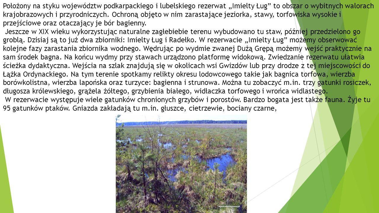 """Położony na styku województw podkarpackiego i lubelskiego rezerwat """"Imielty Ług to obszar o wybitnych walorach krajobrazowych i przyrodniczych."""