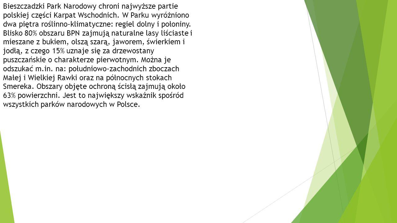 Bieszczadzki Park Narodowy chroni najwyższe partie polskiej części Karpat Wschodnich.