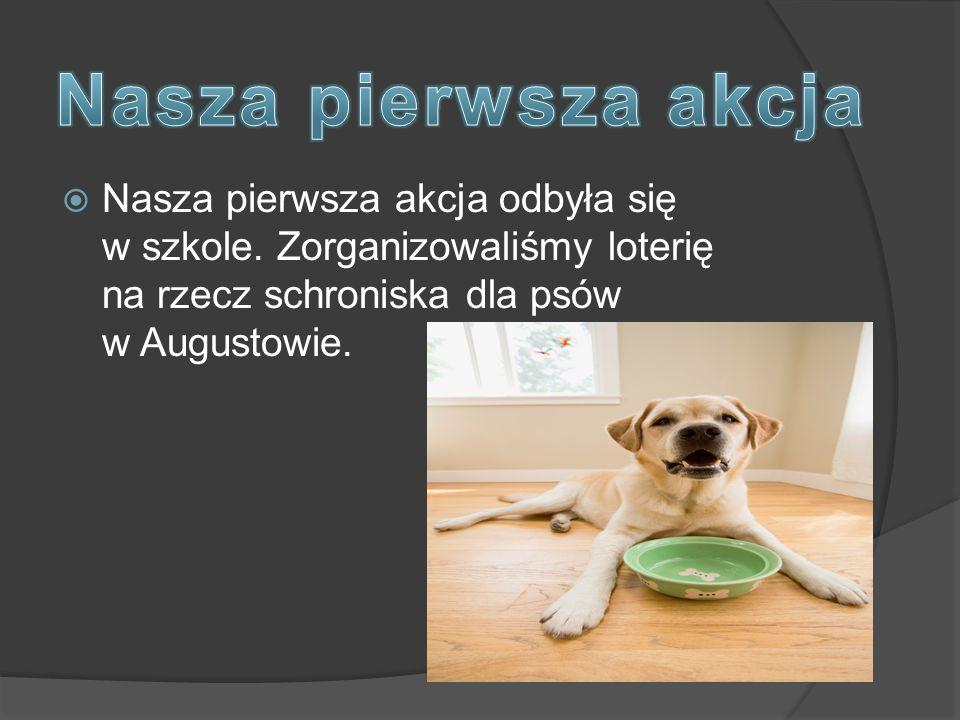  Nasza pierwsza akcja odbyła się w szkole. Zorganizowaliśmy loterię na rzecz schroniska dla psów w Augustowie.