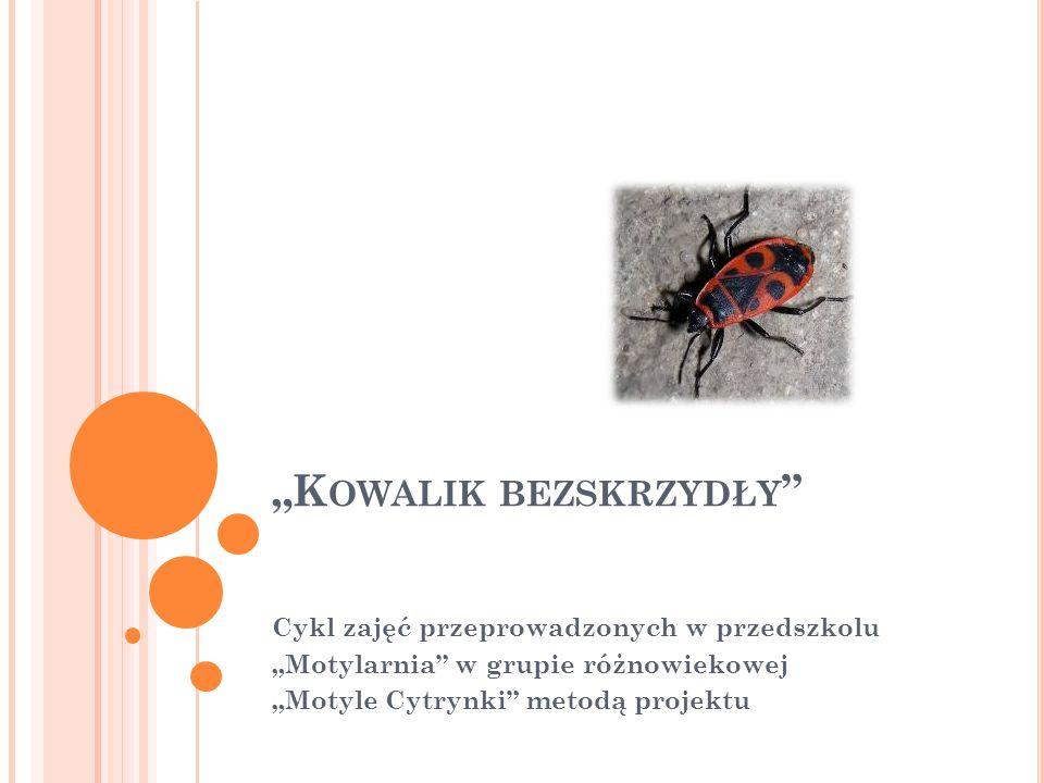 """C HARAKTERYSTYKA TEMATU Temat """"Kowalik bezskrzydły to projekt badawczy nakierowany na zdobycie ogólnej wiedzy w zakresie budowy owadów oraz szczegółowego poznania życia kowalika bezskrzydłego."""