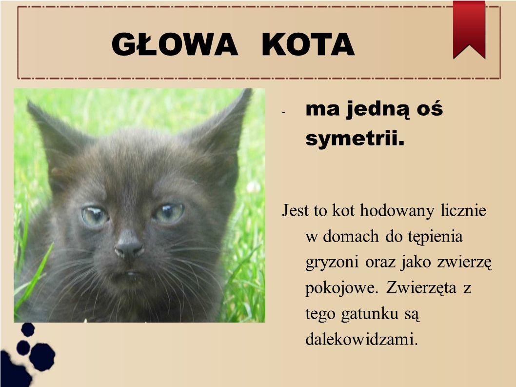 GŁOWA KOTA - ma jedną oś symetrii. Jest to kot hodowany licznie w domach do tępienia gryzoni oraz jako zwierzę pokojowe. Zwierzęta z tego gatunku są d