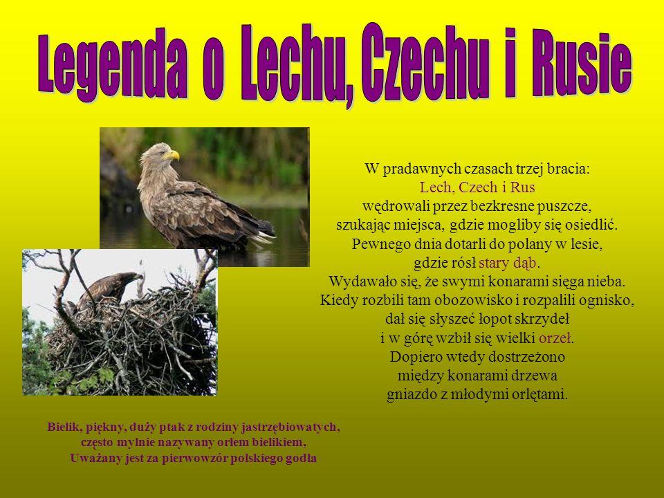 Bielik, piękny, duży ptak z rodziny jastrzębiowatych, często mylnie nazywany orłem bielikiem, Uważany jest za pierwowzór polskiego godła W pradawnych