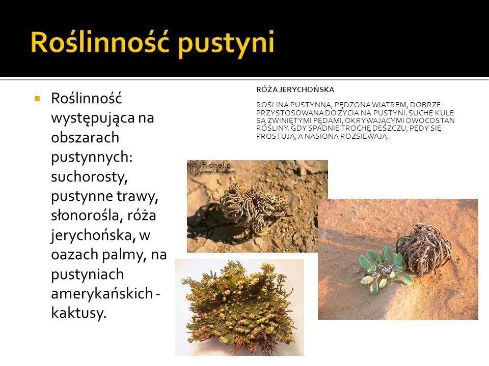  Roślinność występująca na obszarach pustynnych: suchorosty, pustynne trawy, słonorośla, róża jerychońska, w oazach palmy, na pustyniach amerykańskich - kaktusy.