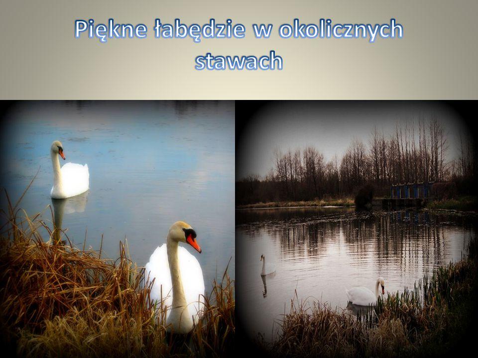 """We wsi Mniszek nad zalewem rzeki Tuczyn znajduje się mała elektrownia wodna nazwana przez mieszkańców """"Kozłówką"""". Elektrownia wodna jest wykorzystanie"""