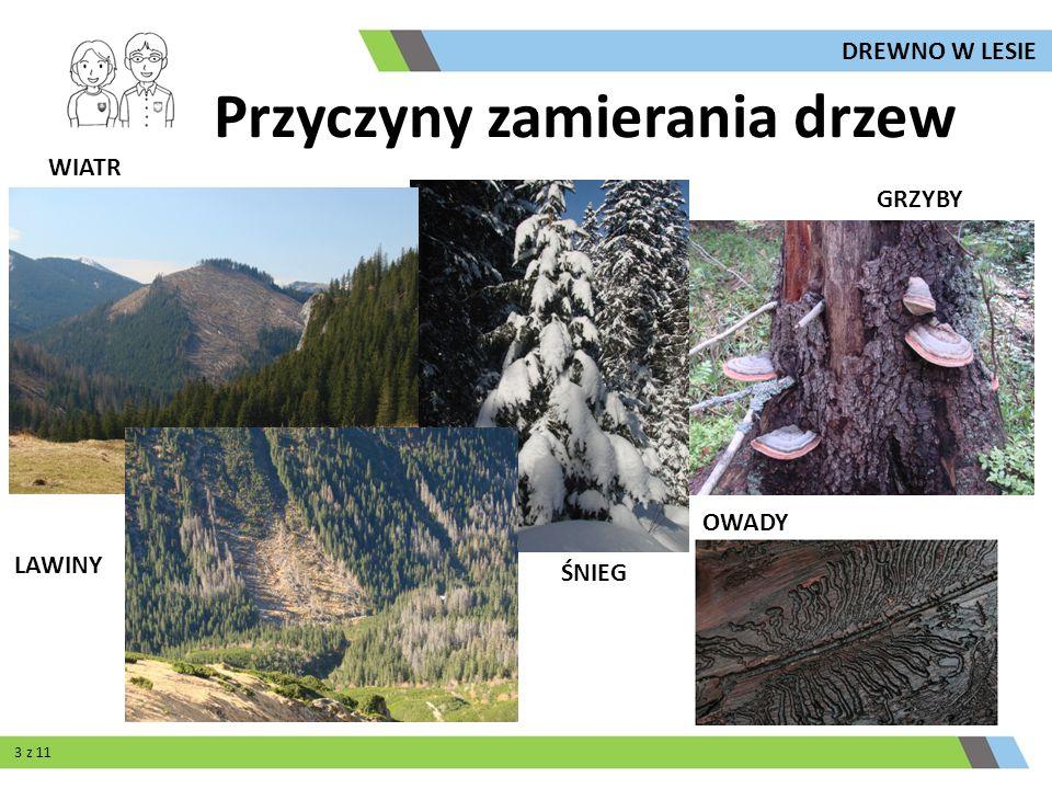 Przyczyny zamierania drzew WIATR ŚNIEG LAWINY GRZYBY OWADY 3 z 11 DREWNO W LESIE