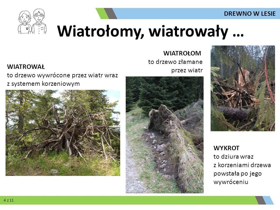 WIATROWAŁ to drzewo wywrócone przez wiatr wraz z systemem korzeniowym WIATROŁOM to drzewo złamane przez wiatr WYKROT to dziura wraz z korzeniami drzew