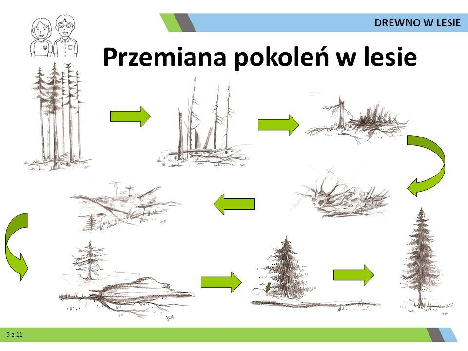Przemiana pokoleń w lesie 5 z 11 DREWNO W LESIE