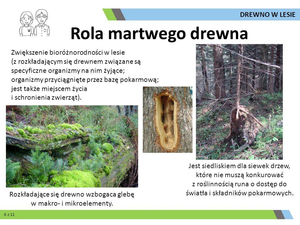 Rola martwego drewna Rozkładające się drewno wzbogaca glebę w makro- i mikroelementy. Jest siedliskiem dla siewek drzew, które nie muszą konkurować z