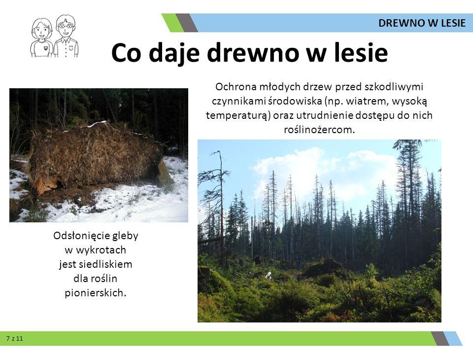 Odsłonięcie gleby w wykrotach jest siedliskiem dla roślin pionierskich. Ochrona młodych drzew przed szkodliwymi czynnikami środowiska (np. wiatrem, wy