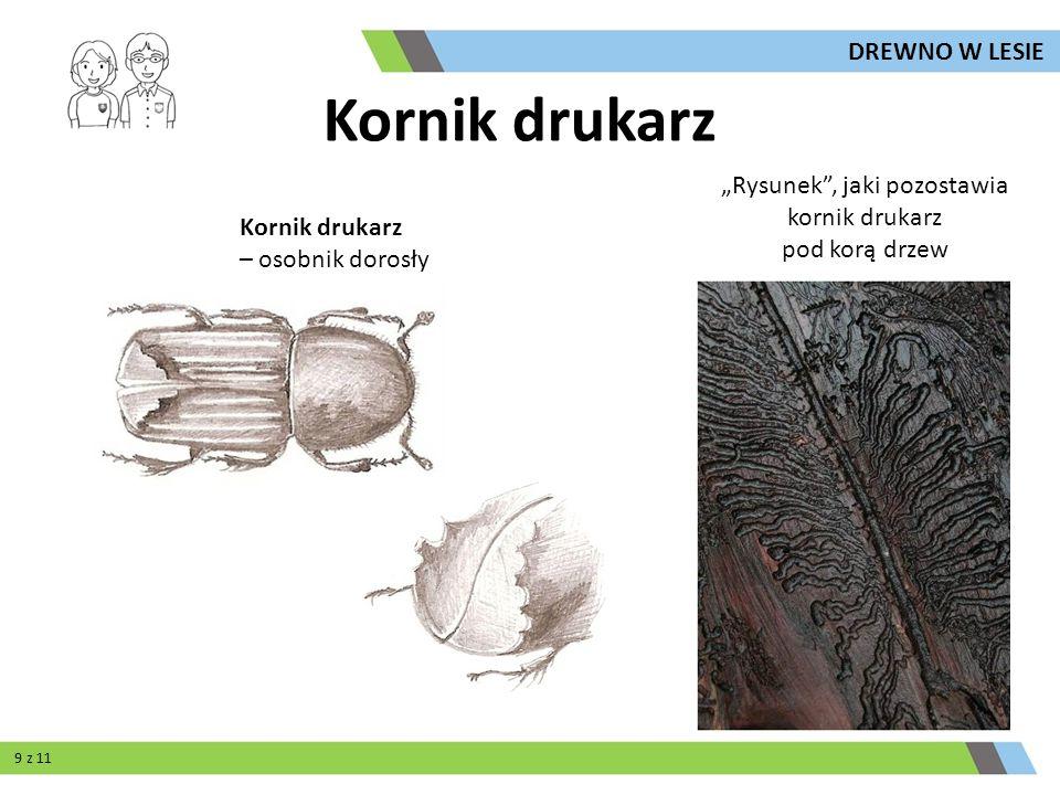 Pułapki feromonowe zawierają wewnątrz syntetyczne substancje chemiczne wabiące chrząszcze, ograniczają one populację kornika i służą do jej oceny.