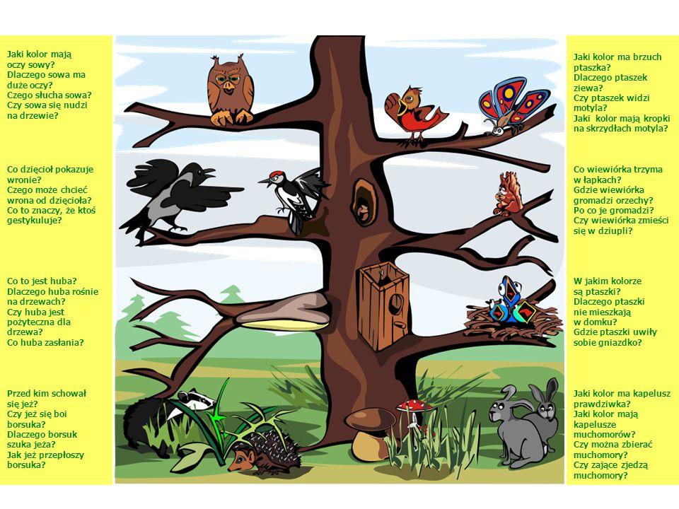 Jaki kolor mają oczy sowy? Dlaczego sowa ma duże oczy? Czego słucha sowa? Czy sowa się nudzi na drzewie? Jaki kolor ma brzuch ptaszka? Dlaczego ptasze