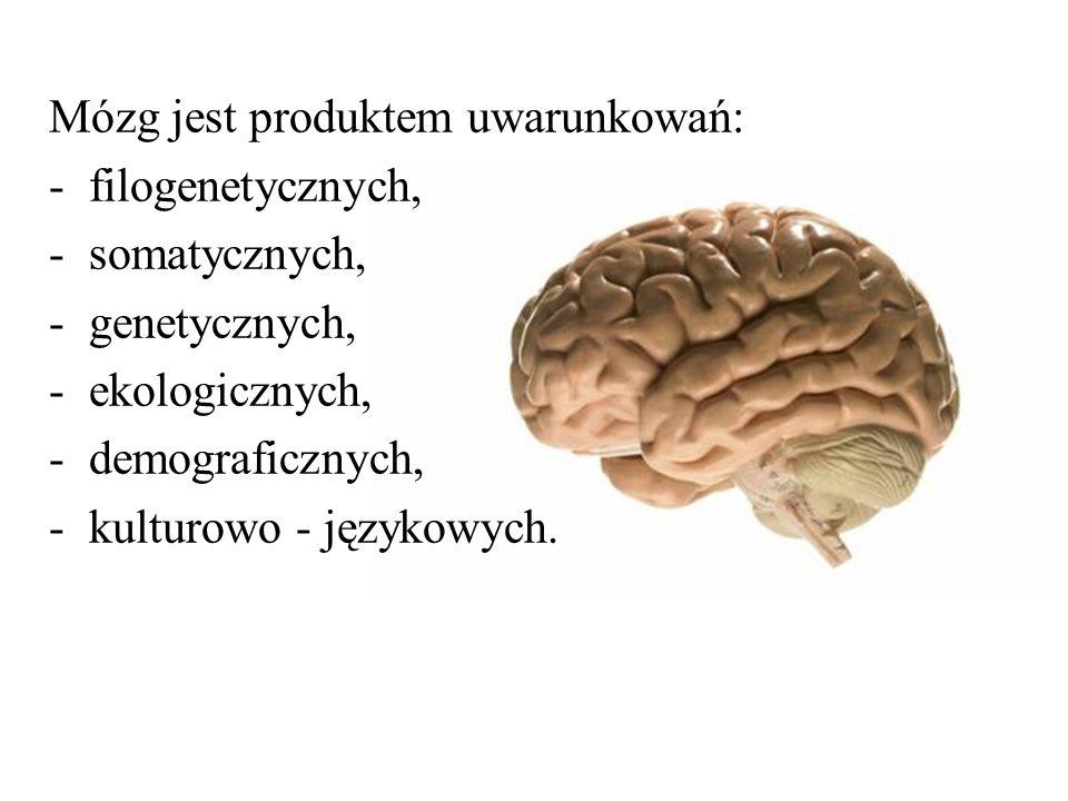Mózg jest produktem uwarunkowań: -filogenetycznych, -somatycznych, -genetycznych, -ekologicznych, -demograficznych, -kulturowo - językowych.