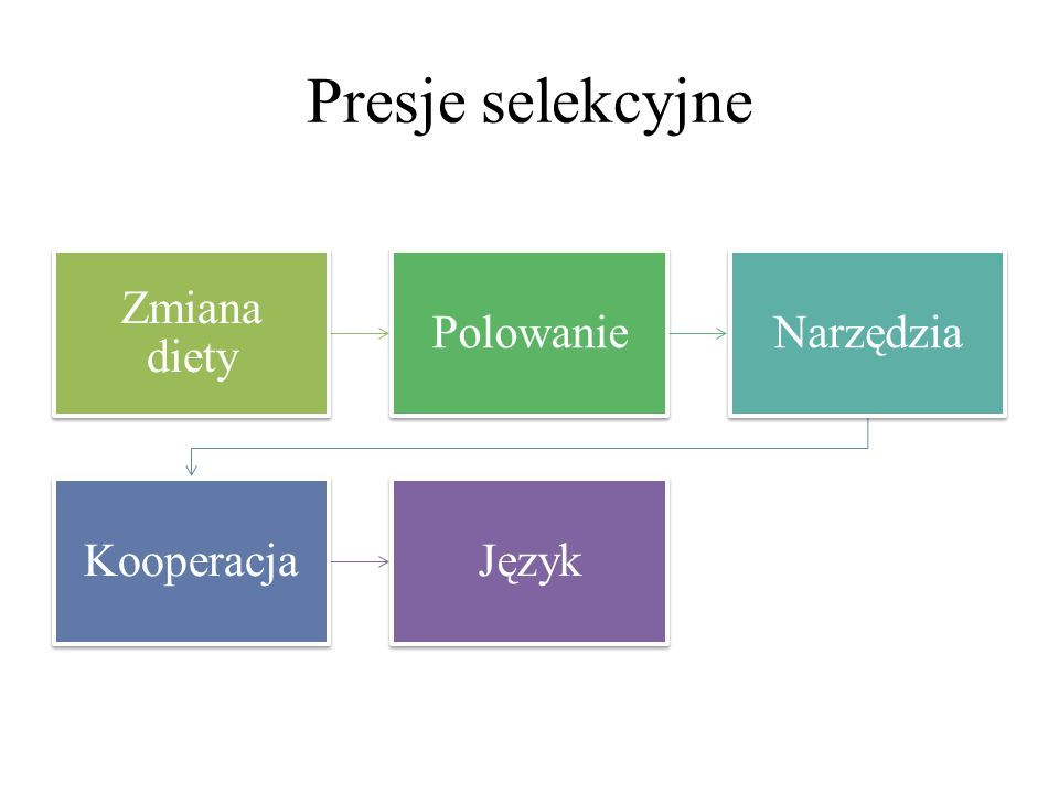 Presje selekcyjne Zmiana diety PolowanieNarzędzia KooperacjaJęzyk