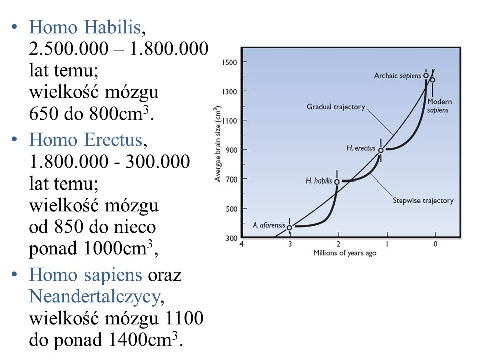Homo Habilis, 2.500.000 – 1.800.000 lat temu; wielkość mózgu 650 do 800cm 3.