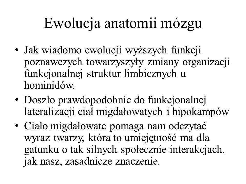 Ewolucja anatomii mózgu Jak wiadomo ewolucji wyższych funkcji poznawczych towarzyszyły zmiany organizacji funkcjonalnej struktur limbicznych u hominidów.