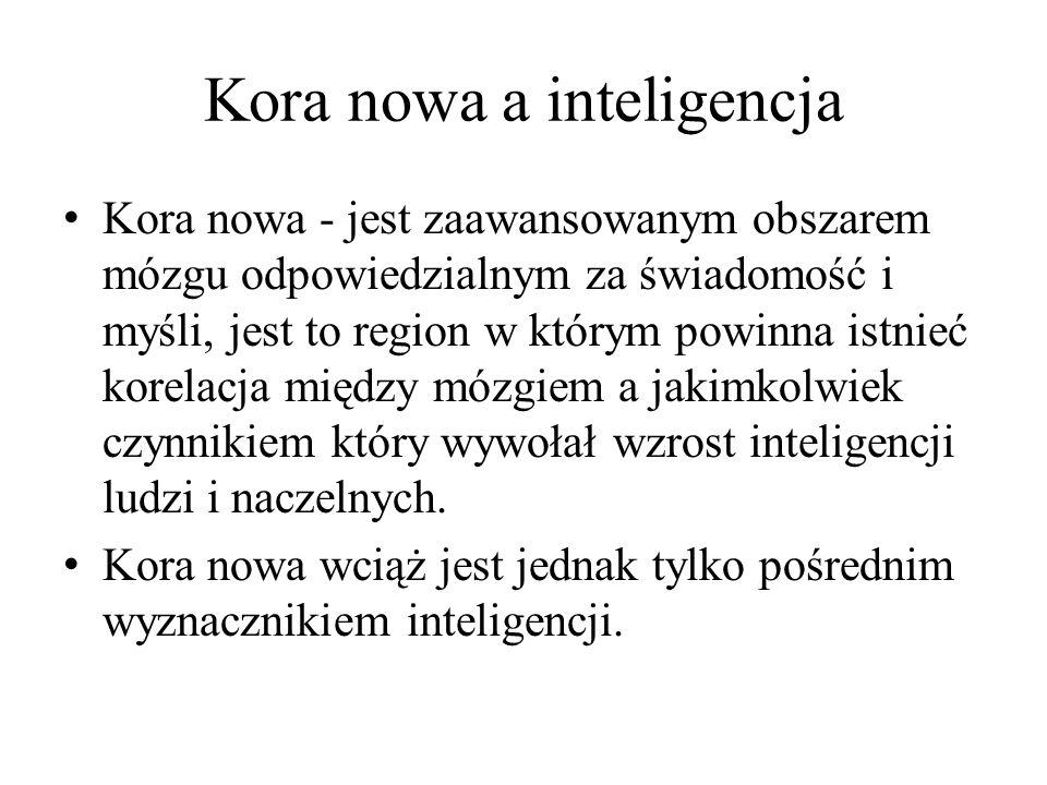 Kora nowa a inteligencja Kora nowa - jest zaawansowanym obszarem mózgu odpowiedzialnym za świadomość i myśli, jest to region w którym powinna istnieć korelacja między mózgiem a jakimkolwiek czynnikiem który wywołał wzrost inteligencji ludzi i naczelnych.