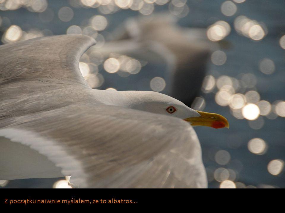 Z początku naiwnie myślałem, że to albatros…