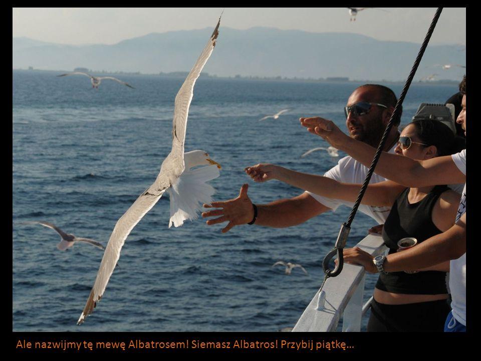 Ale nazwijmy tę mewę Albatrosem! Siemasz Albatros! Przybij piątkę…