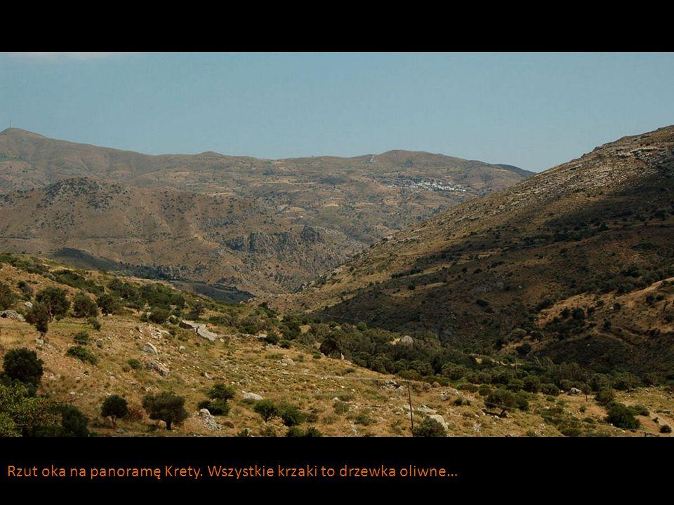 Rzut oka na panoramę Krety. Wszystkie krzaki to drzewka oliwne…