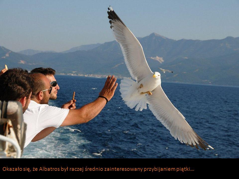 Okazało się, że Albatros był raczej średnio zainteresowany przybijaniem piątki…