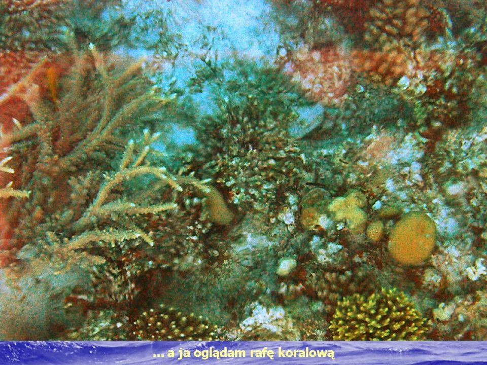 ... a ja oglądam rafę koralową