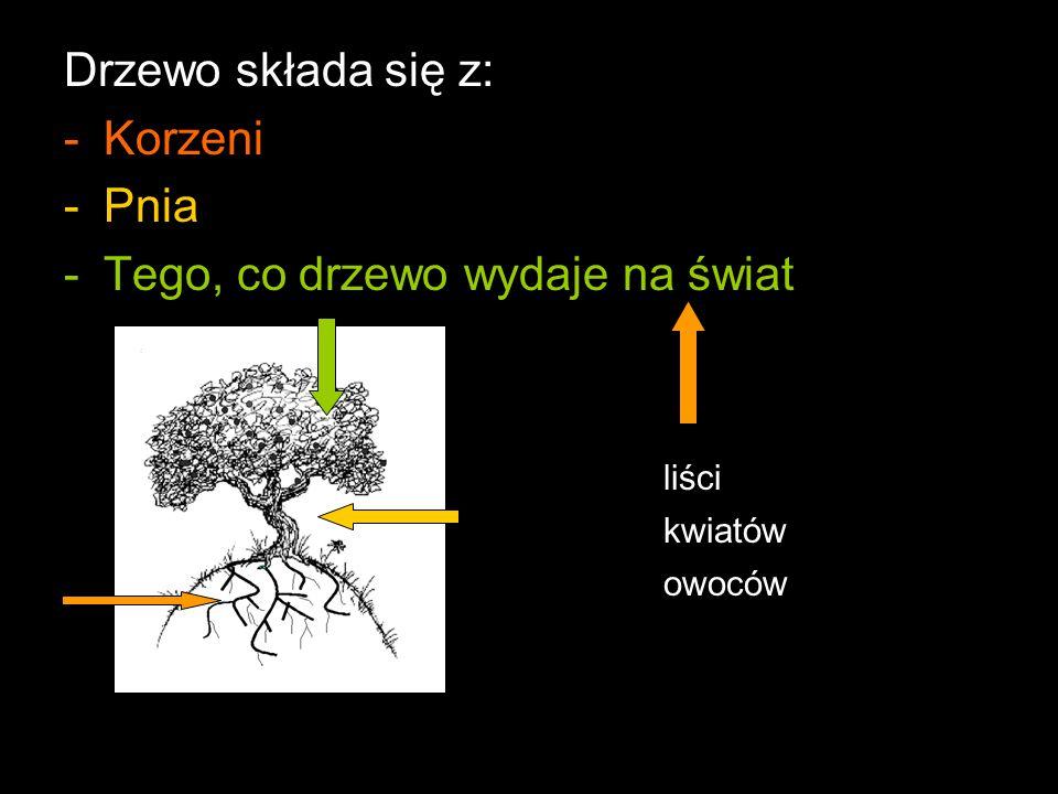 Drzewo składa się z: -Korzeni -Pnia -Tego, co drzewo wydaje na świat liści kwiatów owoców