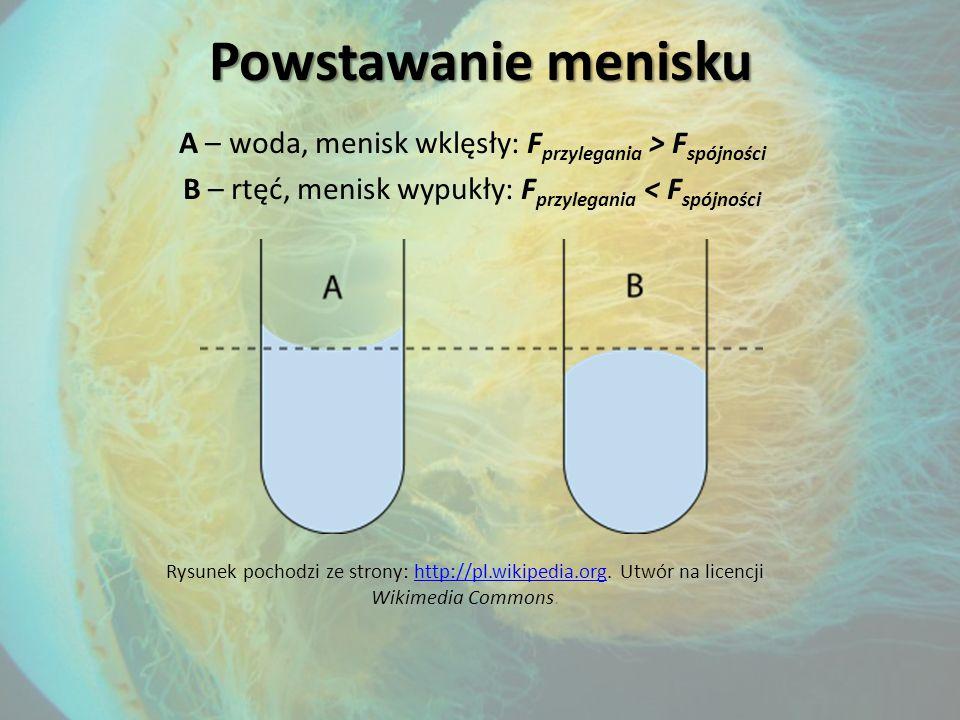 Powstawanie menisku A – woda, menisk wklęsły: F przylegania > F spójności B – rtęć, menisk wypukły: F przylegania < F spójności Rysunek pochodzi ze strony: http://pl.wikipedia.org.