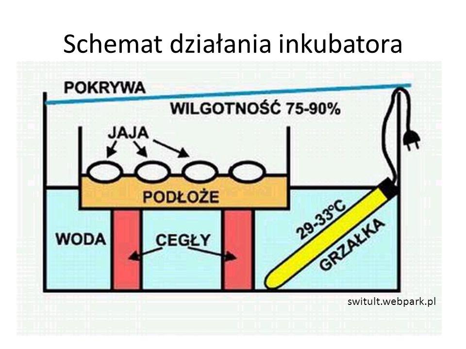 Schemat działania inkubatora switult.webpark.pl