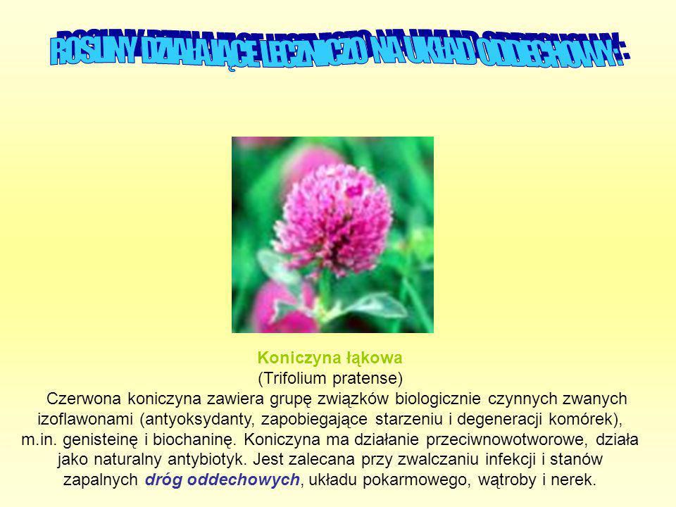Koniczyna łąkowa (Trifolium pratense) Czerwona koniczyna zawiera grupę związków biologicznie czynnych zwanych izoflawonami (antyoksydanty, zapobiegają