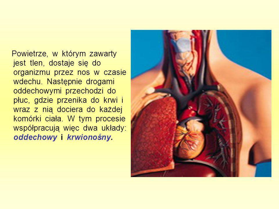 Powietrze, w którym zawarty jest tlen, dostaje się do organizmu przez nos w czasie wdechu. Następnie drogami oddechowymi przechodzi do płuc, gdzie prz