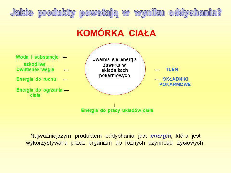 Uwalnia się energia zawarta w składnikach pokarmowych KOMÓRKA CIAŁA Woda i substancje ← szkodliwe Dwutlenek węgla ← ← TLEN Energia do ruchu ← ← SKŁADN