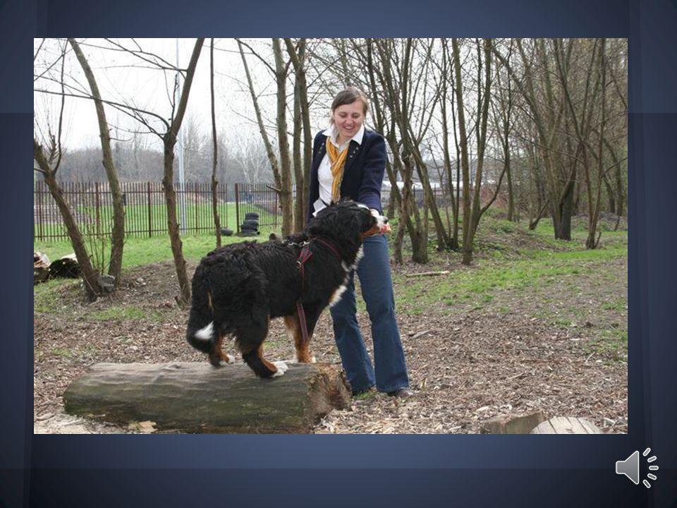 Pies jest stworzeniem, które towarzyszy człowiekowi od tysięcy lat.