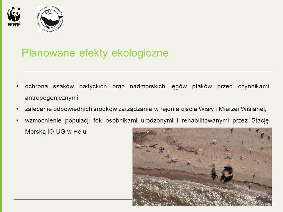 Planowane efekty ekologiczne ochrona ssaków bałtyckich oraz nadmorskich lęgów ptaków przed czynnikami antropogenicznymi zalecenie odpowiednich środków zarządzania w rejonie ujścia Wisły i Mierzei Wiślanej, wzmocnienie populacji fok osobnikami urodzonymi i rehabilitowanymi przez Stację Morską IO UG w Helu