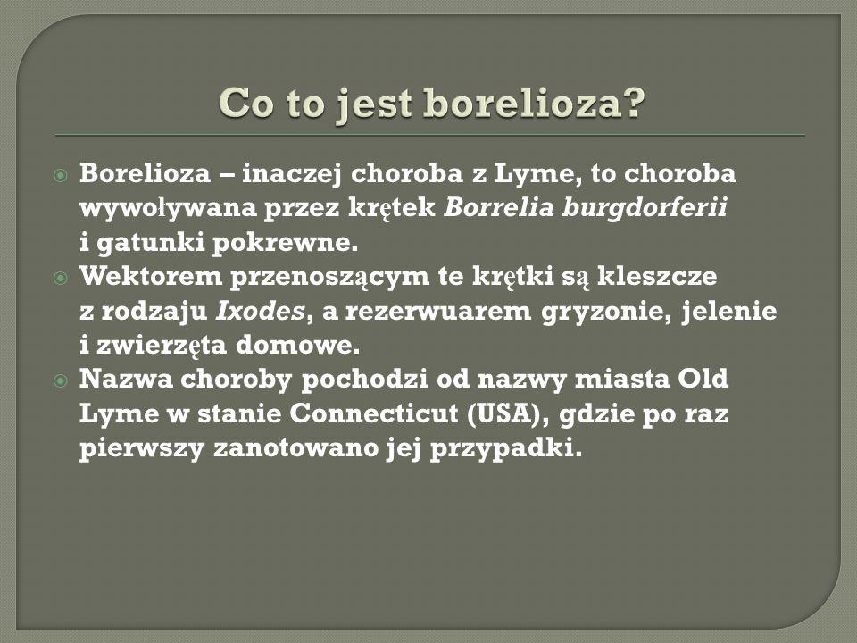  Borelioza – inaczej choroba z Lyme, to choroba wywo ł ywana przez kr ę tek Borrelia burgdorferii i gatunki pokrewne.  Wektorem przenosz ą cym te kr